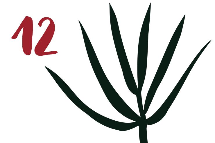 Red Bug Culture Adventskalender 2019 - TAG 12